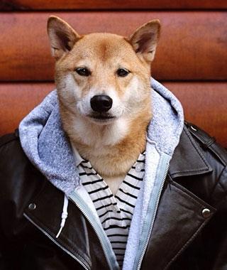 menswear_dog