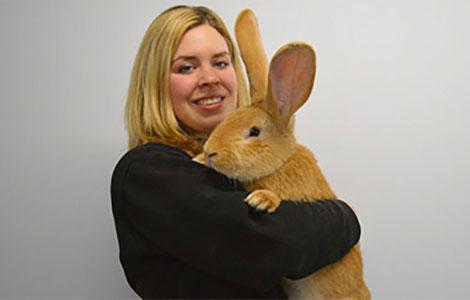 d rfen wir vorstellen atlas das kaninchen in hundegr e tr s click. Black Bedroom Furniture Sets. Home Design Ideas