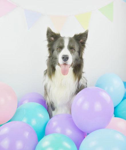 Laut einer Studie erinnern sich Hunde an Dinge, die du getan hast, nciht nur an Gefühle, weil sie ein Langzeitgedächtnis haben.