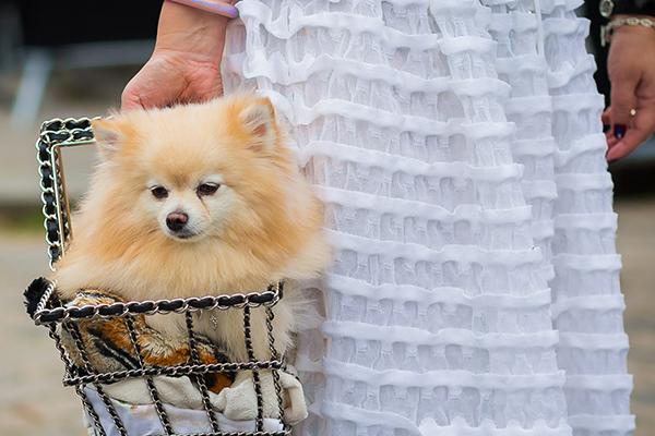 Süßer Streetstyle: Hund im Korb einer Bloggerin