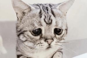 luhu-traurigste-katze-instagram-thumb