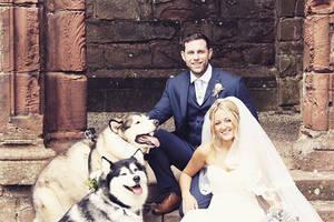 Diese beiden Hunde durften Trauzeugen auf der Hochzeit ihrer Herrchen sein.